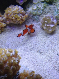 We found Nemo!